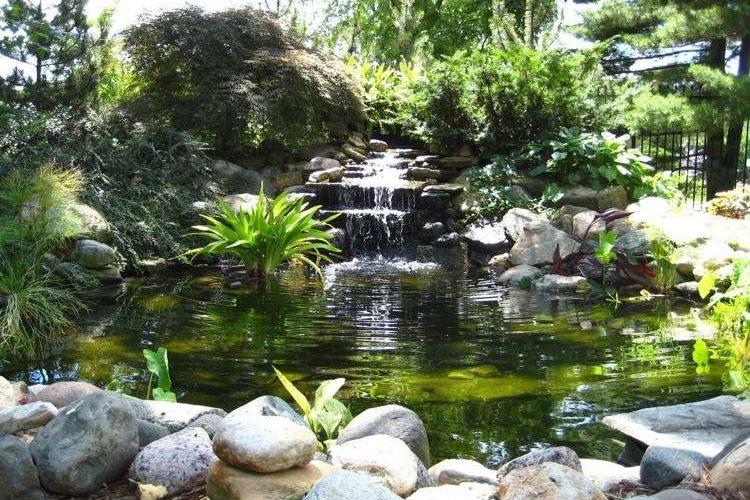 Faut-il hiverner ses plantes aquatiques ?