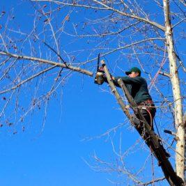 Que faut-il savoir sur la taille douce des arbres ?